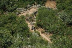 Ludzie chodzi przez brud ścieżki wśród lasowej halizny obraz stock