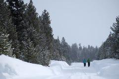 Ludzie Chodzi Przez śniegu w Halnego pustkowia sosny lesie Fotografia Stock