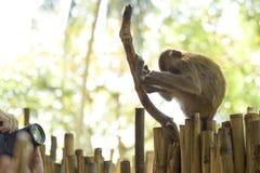 Ludzie chwyt kamery biorą fotografię dosypianie małpa, ja śpi na drzewie z siedzącą pozycją fotografia royalty free