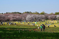 Ludzie cieszy się pogodnego wiosna dzień w Japonia Obrazy Stock