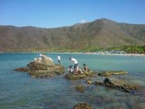 Ludzie cieszy się sunnny dzień przy Bahia Concha wyrzucać na brzeg zdjęcia royalty free