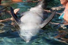 ludzie dotknąć delfinów Fotografia Royalty Free