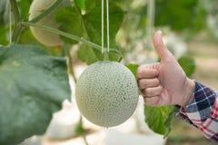 Ludzie i melonu rolny poj?cie - szcz??liwy m?odej kobiety lub rolnika melon w szklarnia rolnych pokazuje kciukach zdjęcia stock