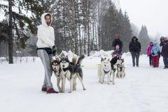 Ludzie i psy podczas świętowania końcówka zimy imię Fotografia Stock