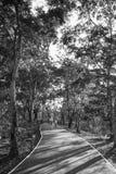 Ludzie jadą w Sri Nakhon Khuean Khan parku, uderzenie Kachao, Tajlandia Wizerunek czarny i biały Obraz Stock