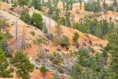 Ludzie jeździeckich koni w Bryka jaru parku narodowym, Utah, usa Fotografia Stock