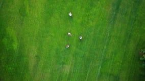 Ludzie jechać rowery, widok z lotu ptaka zdjęcie wideo