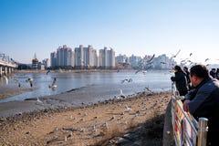 Ludzie karmi seagulls zdjęcia royalty free
