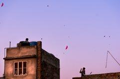 Ludzie lata kanie od domów w Jaipur Fotografia Royalty Free