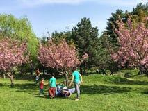 Ludzie Ma zabawę W Japońskim ogródzie Herastrau Jawny park Zdjęcia Stock