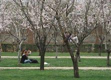 Ludzie migdałowych drzew w kwiacie w Retiro parku, Madryt zdjęcia royalty free