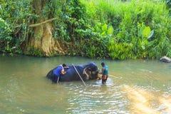 Ludzie myją słonia przeciw pięknej tropikalnej naturze, Sri Lanka Obraz Stock