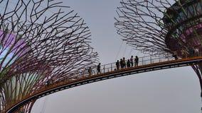Ludzie na OCBC Skyway w ogródach zatoką w wieczór zdjęcie wideo