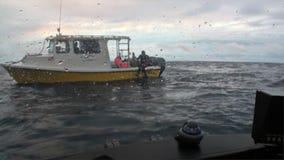 Ludzie na podwodnym podwodnym oddawaniu wysyłać Pacyficznego ocean zdjęcie wideo