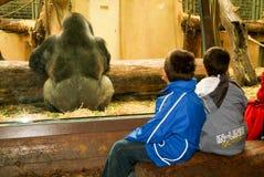 Ludzie obserwuje goryle w zoo Zurich na Szwajcaria Zdjęcia Stock