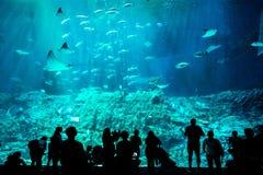 Ludzie obserwuje ryby za ogromnym szkłem w akwarium fotografia royalty free