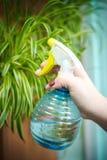 Ludzie, ogrodnictwo, kwiatu flancowanie i zawodu pojęcie, - zamyka w górę, ręki kobieta lub ogrodniczka wręcza opryskiwanie dom fotografia royalty free