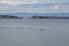 Ludzie pływają w czarnym morzu na łodziach, uczestniczą w marintime rywalizacji na tła morza pięknym krajobrazie, obraz stock