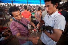 Ludzie podczas balijczyka cockfighting Obrazy Stock