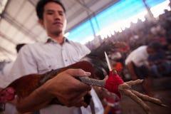 Ludzie podczas balijczyka cockfighting Zdjęcia Royalty Free