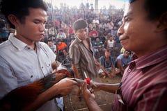Ludzie podczas balijczyka cockfighting Fotografia Royalty Free
