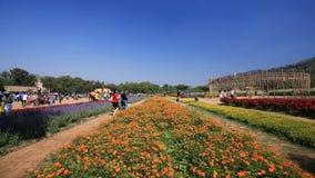 Ludzie podróżują i chodzący w kwiatu polu Jim Thompson gospodarstwo rolne zbiory wideo