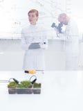 Ludzie pracuje w laboratorium zdjęcia royalty free