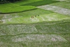 Ludzie pracuje w rolniczym polu zdjęcia stock