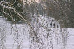 Ludzie spaceru w zima parku W przedpole brzozy gałąź fotografia stock