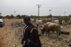Ludzie sprzedaje krowy blisko wysypiska w obrzeżach miasto Bissau, w Bissau, afryka zachodnia zdjęcia stock