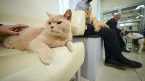 Ludzie trzymają ich zwierzęta domowe czekać na ich zwrot dla prewencyjnego szczepienia lub egzaminu w ich rękach zbiory