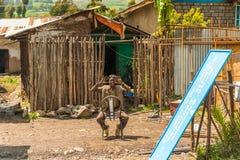 Ludzie w Etiopia, Afryka Obrazy Stock