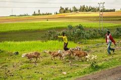 Ludzie w Etiopia, Afryka Obrazy Royalty Free