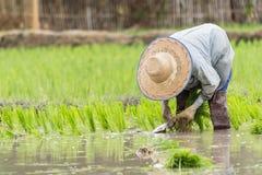 Ludzie w gospodarstwie rolnym Zdjęcie Royalty Free