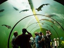 Ludzie w słodkowodnego akwarium tunelowym spojrzeniu przy ryba Fotografia Royalty Free