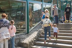 Ludzie w zoo są przyglądający tygrys Fotografia Royalty Free