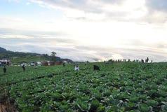 Ludzie wycieczki turysycznej kapusty gospodarstwa rolnego Phu balii berk tła chmury na górze zdjęcie stock