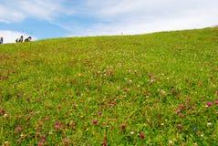 Ludzie wycieczkuje na górze Rigi, zielonej trawie i dzikich kwiatach, Obraz Stock