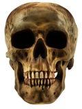 ludzka czaszka Fotografia Royalty Free