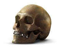 ludzka czaszka Zdjęcia Royalty Free