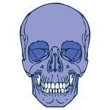 Ludzka czaszka 02 Ilustracja Wektor