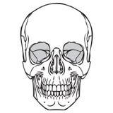 Ludzka czaszka 05 Ilustracji