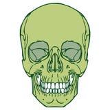 Ludzka czaszka 03 Royalty Ilustracja