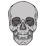 Ludzka czaszka 04 Royalty Ilustracja