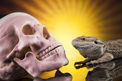 Ludzka czaszka, Agama brodaty, jaszczurki tło Fotografia Stock