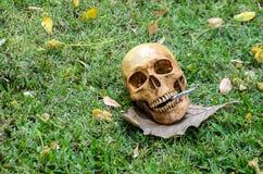 Ludzka czaszka dymi papieros na trawy tle Fotografia Royalty Free