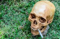 Ludzka czaszka dymi papieros na trawy tle Zdjęcia Royalty Free