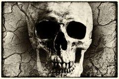 Ludzka czaszka mieszająca z grunge teksturą Fotografia Stock