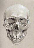 Ludzka czaszka Od przodu ilustracja wektor