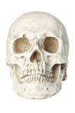 Ludzka czaszka odizolowywająca na bielu Zdjęcie Royalty Free